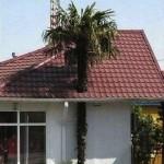 Problème de toiture
